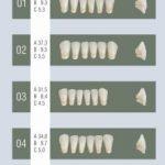 Dentex lower anterior teeth